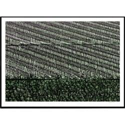 Provence Wine Field
