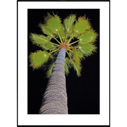 Night Palm Poster