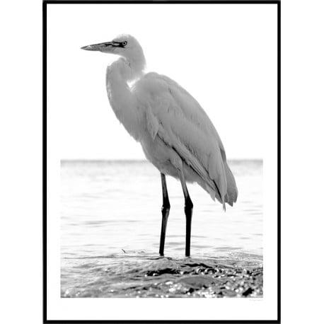 Key West Hank Poster