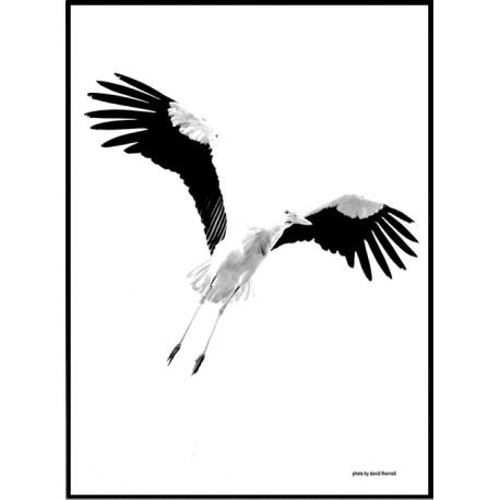 Cigogne Poster