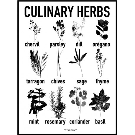 Culinary Herbs Poster