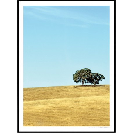 California Trees Poster