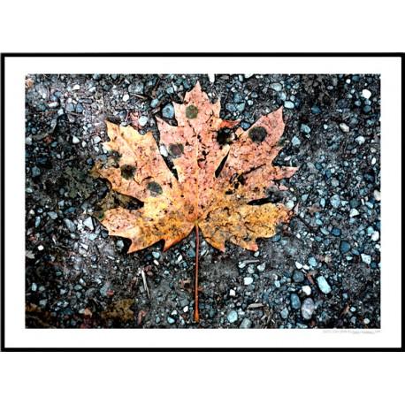 Seattle Leaf Poster