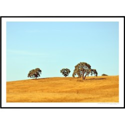 Cali Three Trees Poster