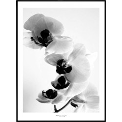 Orkidé Poster