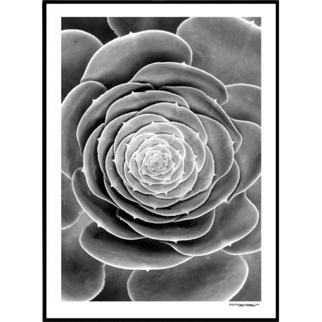 Botanisk Poster