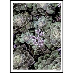 Purple Succulent