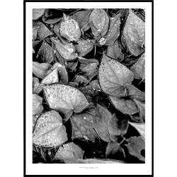 Leaf Life Poster
