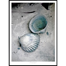The Shells Poster