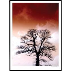 Blomberg Tree
