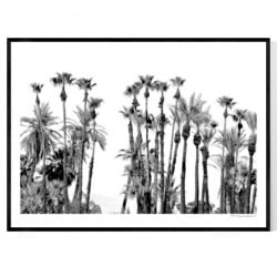 Palm Desert Palms