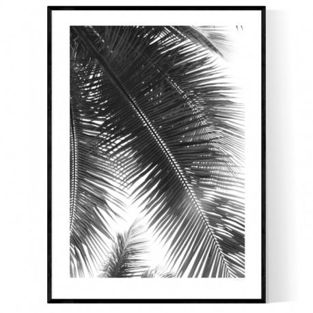 Miami Palms Blk