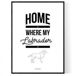 Labrador Home Poster