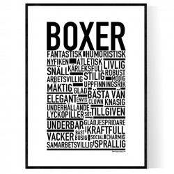 Boxer Poster
