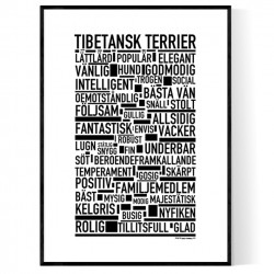 Tibetansk Terrier Poster