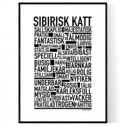Sibirisk Katt Poster