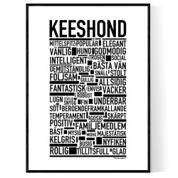 Keeshond Poster