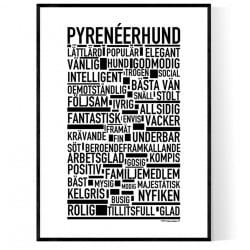 Pyrenéerhund Poster