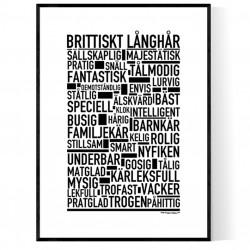 Brittiskt Långhår Poster