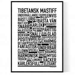 Tibetansk Mastiff Poster