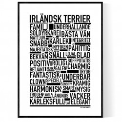 Irländsk Terrier Poster