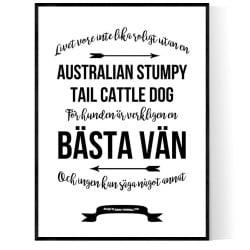 Livet Med Australian Stumpy Tail Cattle Dog