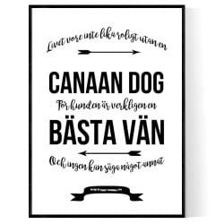 Livet Med Canaan Dog