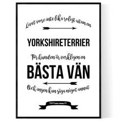 Livet Med Yorkshireterrier