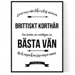 Livet Med Brittiskt Korthår Poster