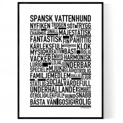 Spansk Vattenhund Poster