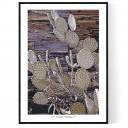 Hackberry Cactus Poster