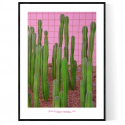 Rancho Mirage Cactus Poster