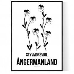Landskapsblomma Ångermanland