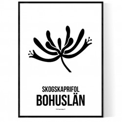 Landskapsblomma Bohuslän