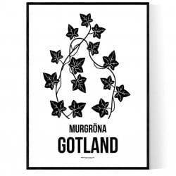 Landskapsblomma Gotland
