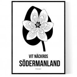 Landskapsblomma Södermanland