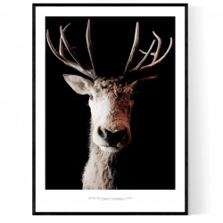 Hjortdjur Poster