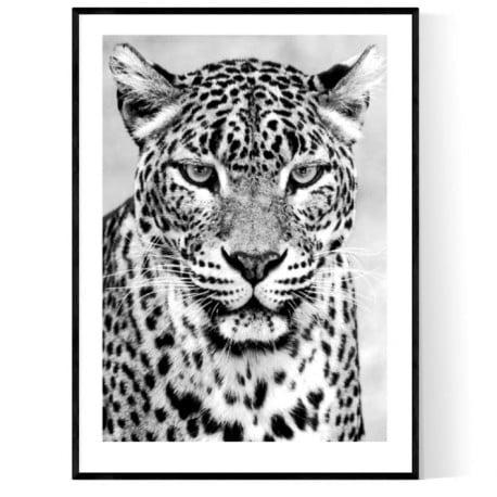 Leopard King Poster