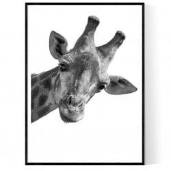 Giraffe King Poster