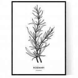 Rosemary Poster