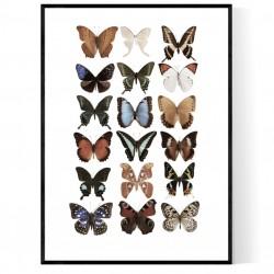 Fjärilar Poster