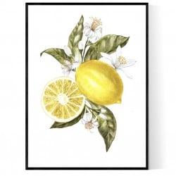 Lemons Flowers Poster