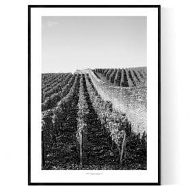 Bourgogne Wineyard Poster