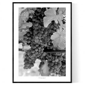 Franska Vindruvor Poster