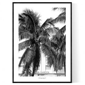 Miami Carlyle Poster