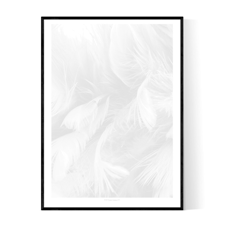 Abstract Grey Feathers