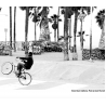 Venice Bicycle