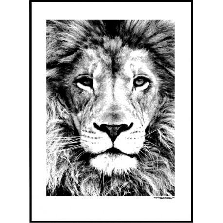 Lejon Poster