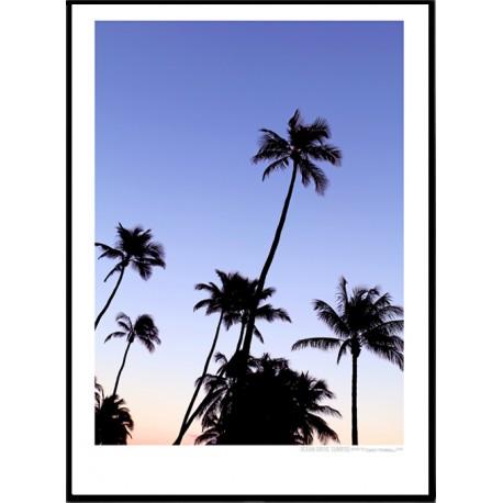 Ocean Drive Palms