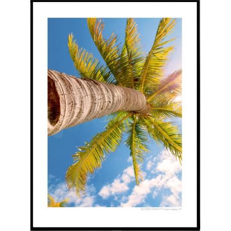 Key West Palm